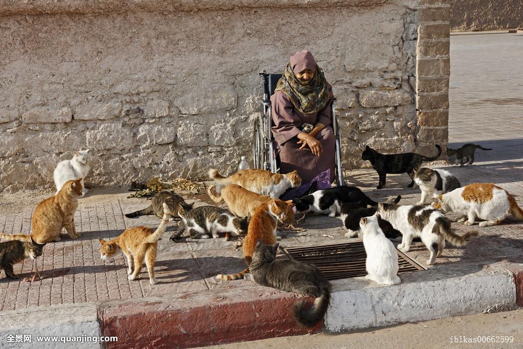 老人,摩洛哥,女人,轮椅,进食,猫,苏维拉,非洲图片