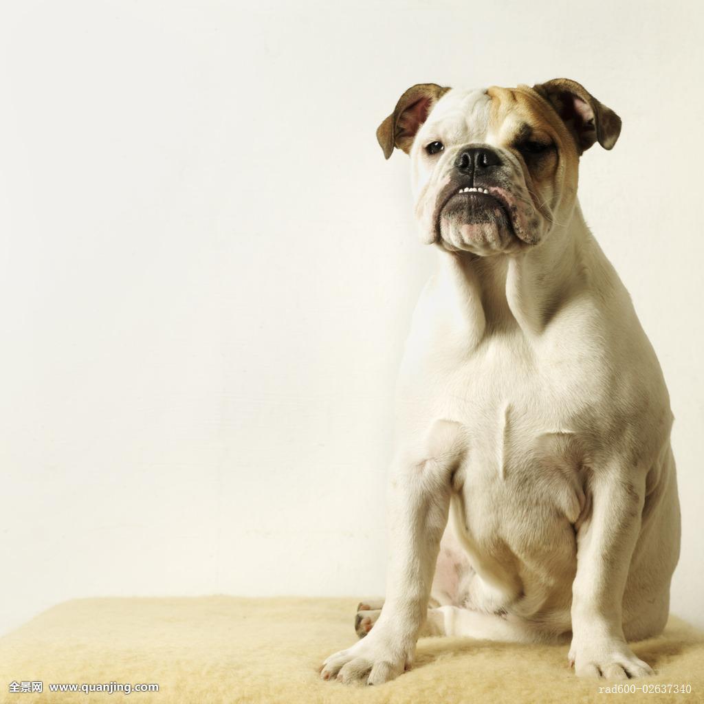 狗脸表情图分享展示图片