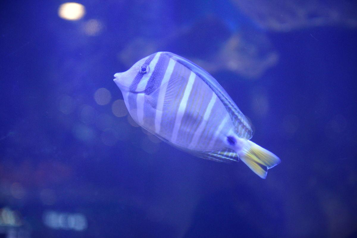 海鱼 海洋鱼类图片