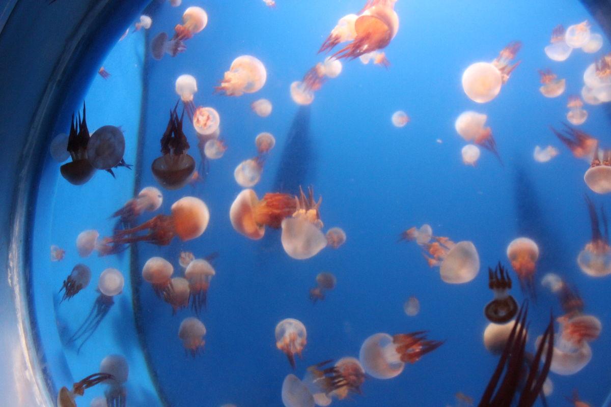 海洋,海鱼,鱼类,群鱼,多彩的鱼,章鱼图片