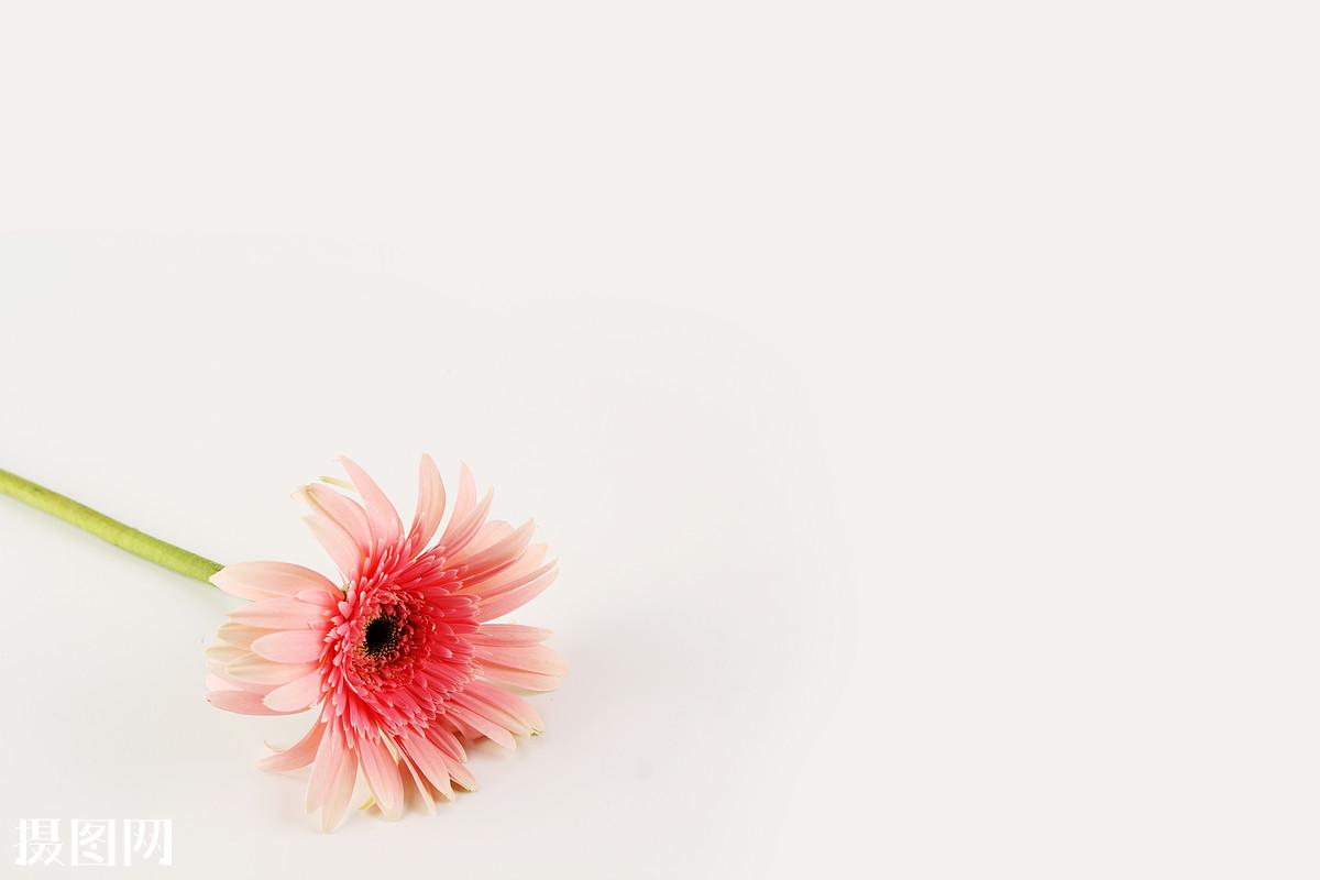 ppt模板,一堆花朵,太阳花,情书模板,彩虹花,文艺风,小清新,淡雅,简单图片
