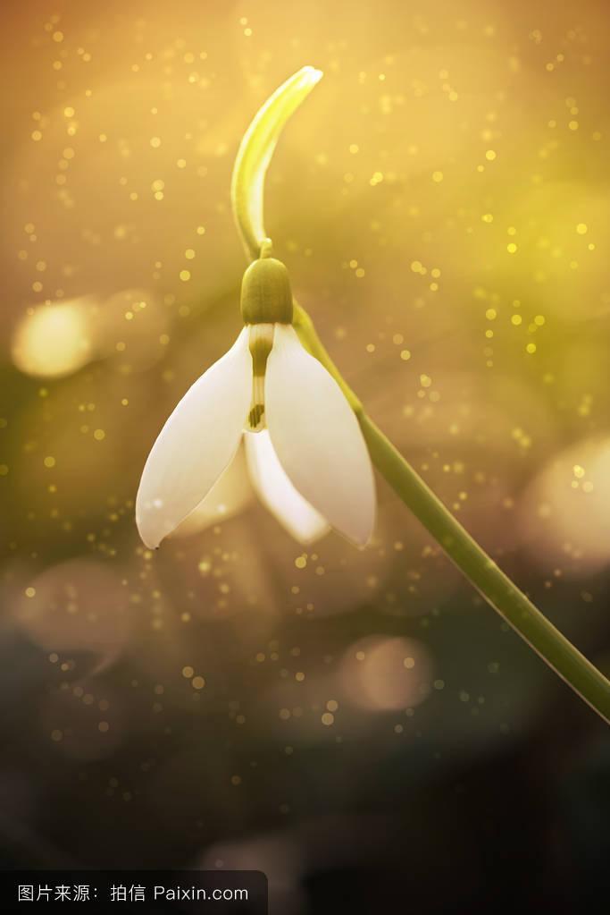 苹果4磹�b9a�yc�iˠ_影响,阳光,植物学,春天,符号,薄雾,宏,户外的,茎,黄色的,自然,幻想