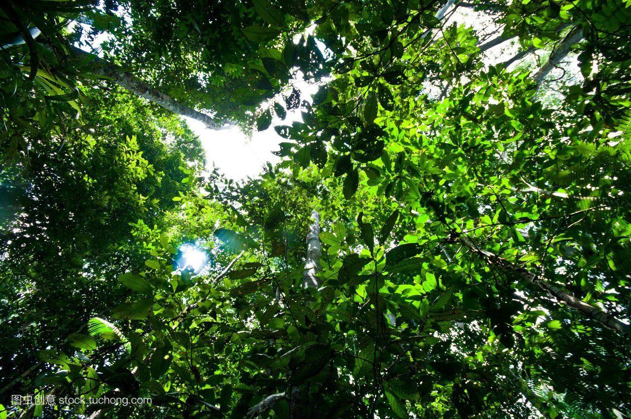 摄影,图片,下面,白天,彩色,构想,直接地,自然,人,背景图,热带,丛林