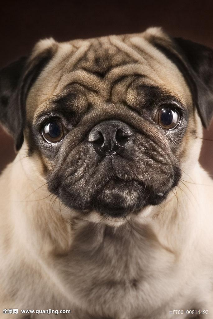 拽着狗不情愿表情包分享展示图片