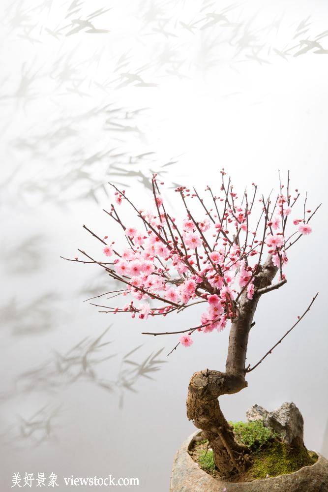 中国,石头,灯光,粉色,花瓣,树干,梅花,竹子,植物,盆栽,清新,园艺,创意图片