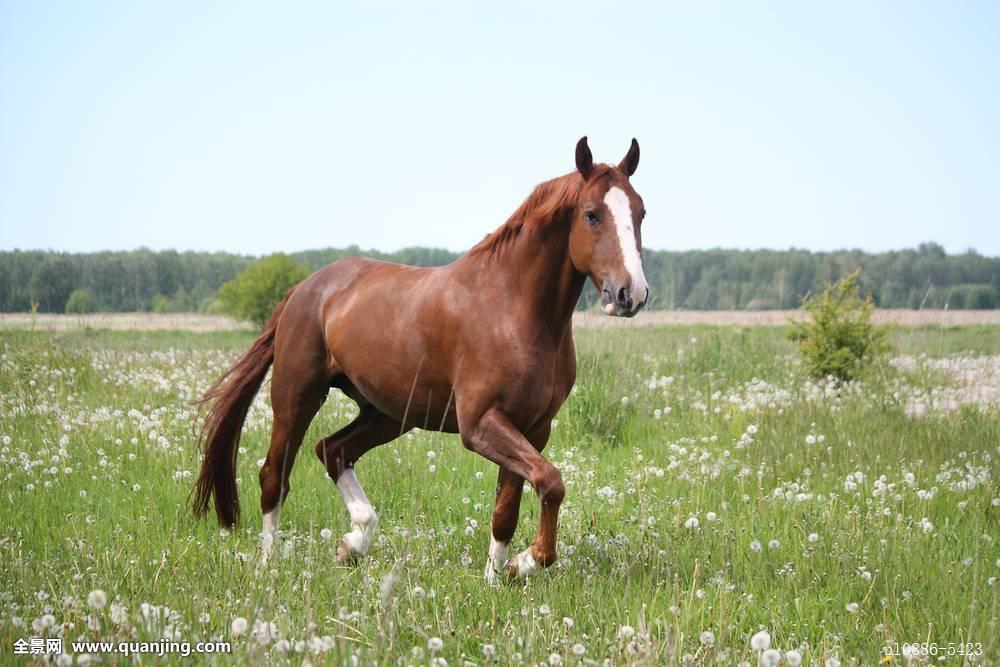 栗子,马,快跑,地点图片