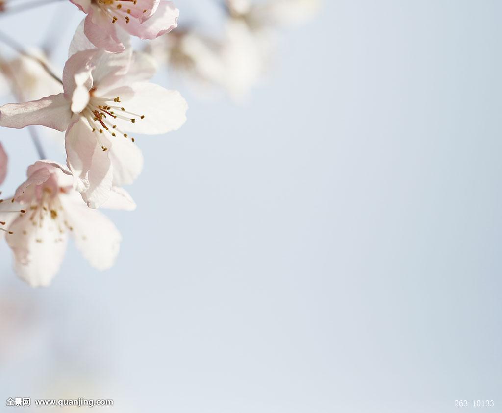 春意盎然,图案,背景,背景图案,素材,创意素材,创意图片,创意摄影,ppt图片