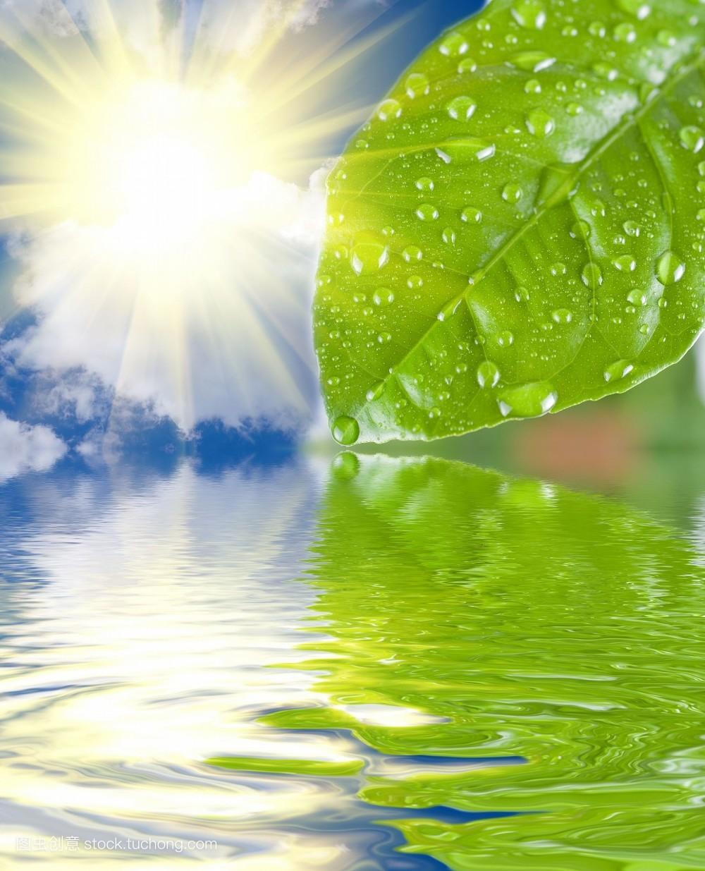 纯净,叶子,气泡,草,树,河流,户外,抽象,花卉,圆形,植物,环境,小,森林图片