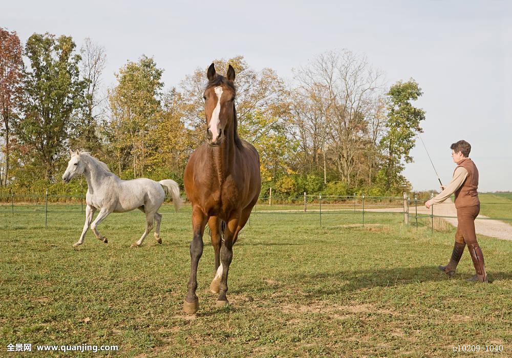 夏天,秋天,动物,竞技场,漂亮,褐色,马,农场,地点,休闲,牲畜,母马,一图片