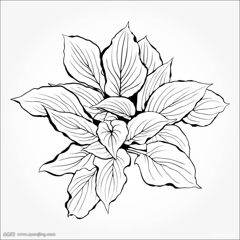 植物,花,白色,黑色,轮廓,隔绝,装饰,单色调,纹身,花瓣,象征,刻花图片