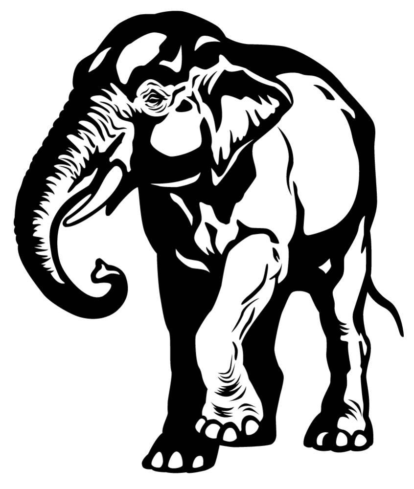 亚洲,东方,大象,象属,哺乳动物,印度,黑白,单色调,动物园,动物,隔绝图片