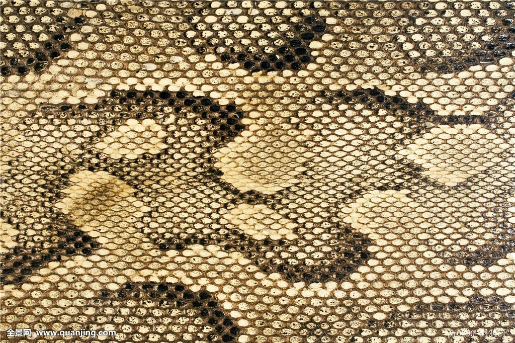鱼鳞状皮肤_手包,微距,特写,进入,时尚,动物,爬行动物,皮肤,皮革,小屋,鳞片,异域