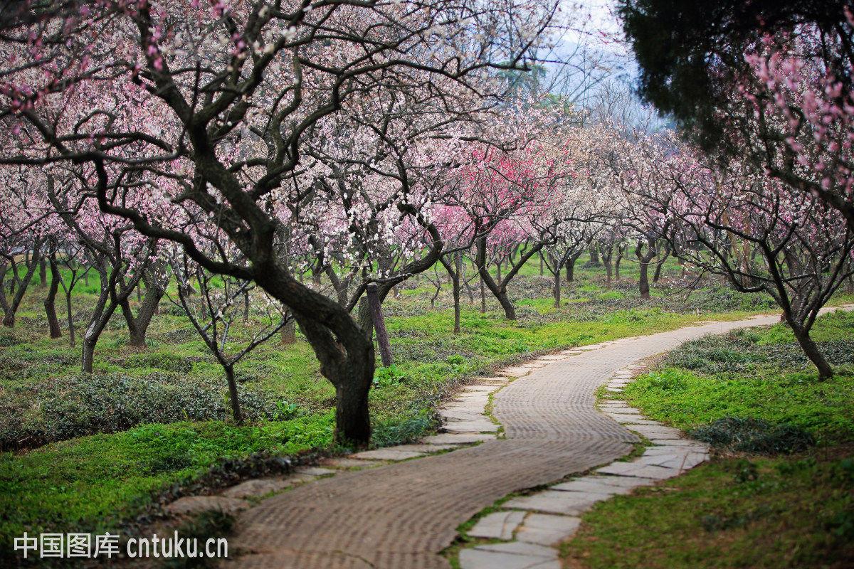 南京梅花山景区