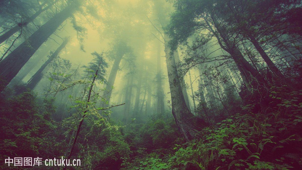 梦幻森林背景素材网分享展示图片