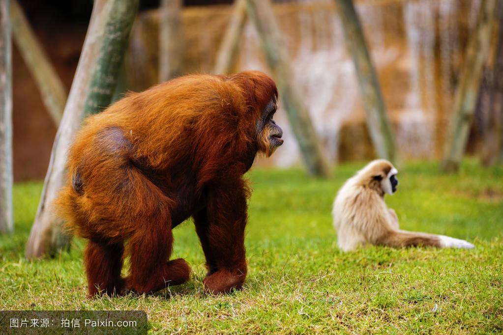 俄国zoozoostnet人与猴