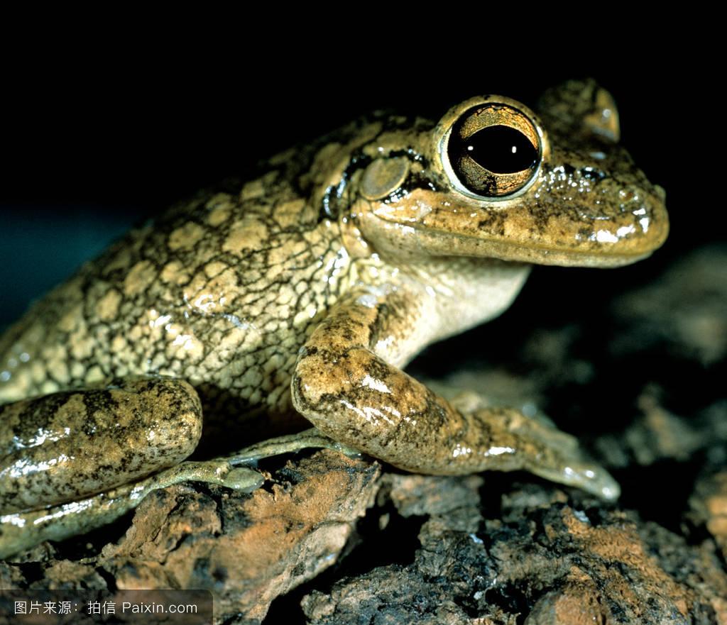 青蛙和蟾蜍都属于两栖动物吗 为什么