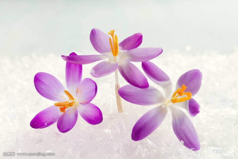 这些花的象征和花语