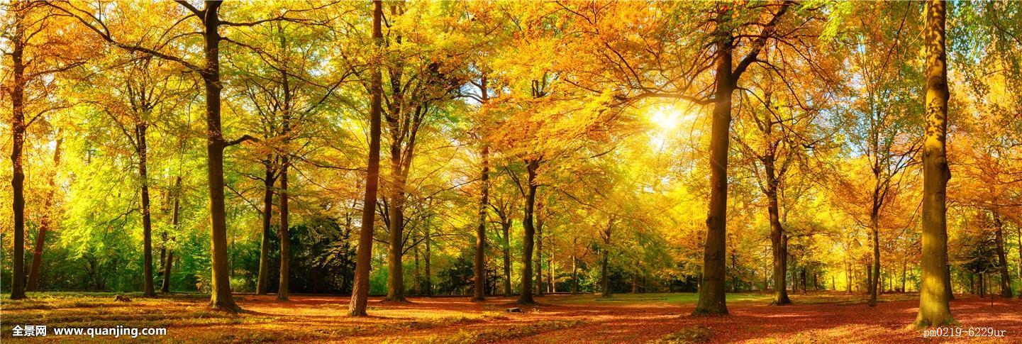 秋季,森林,全景图片