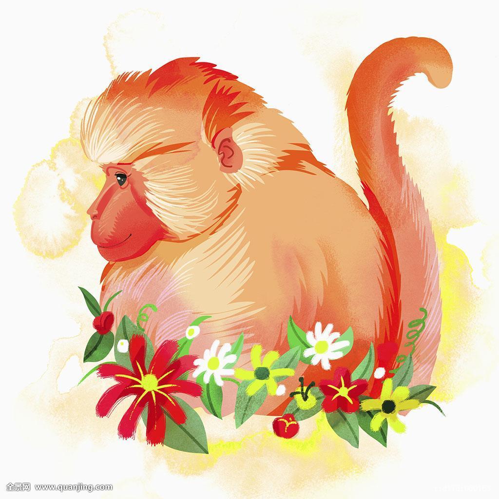 花猴子_侧面视角,猴子,花