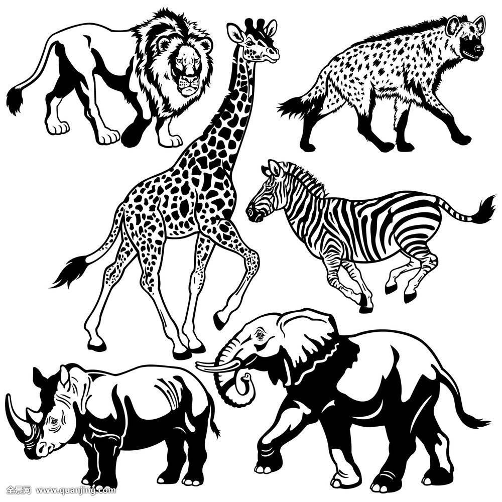 动物,斑点,鬣狗,收集,非洲,大象,犀牛,狮子,长颈鹿,旅游,热带草原图片
