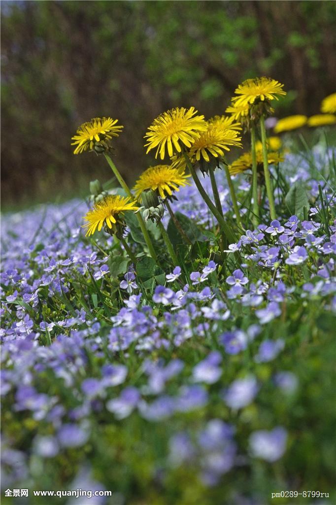 植物,花,春天,奖图片