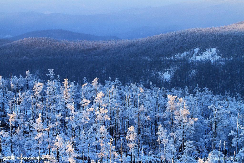 白色,雪景,寒冷,松树,冬天,冰,森林,山脉,东北,植物,雾凇,原始森林图片