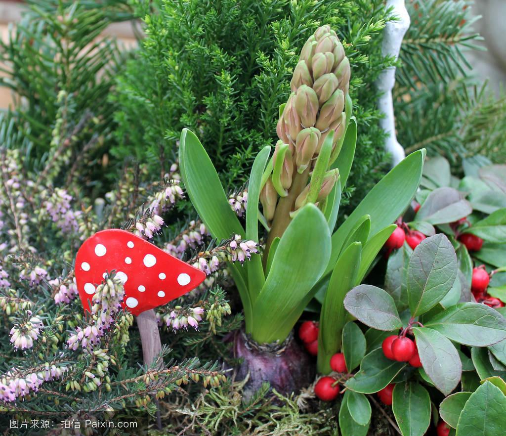 景观花香克诺斯普的了自然卡特照片pilzehyazinten布拉特
