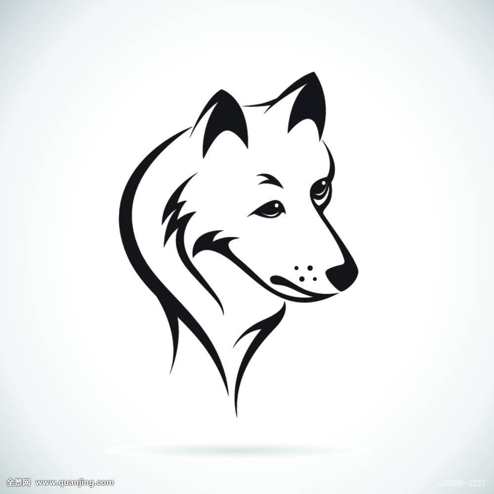 狼,头部,哈士奇犬,插画,吉祥物,狗,黑色,动物,纹身,野生,隔绝,兽,脸图片