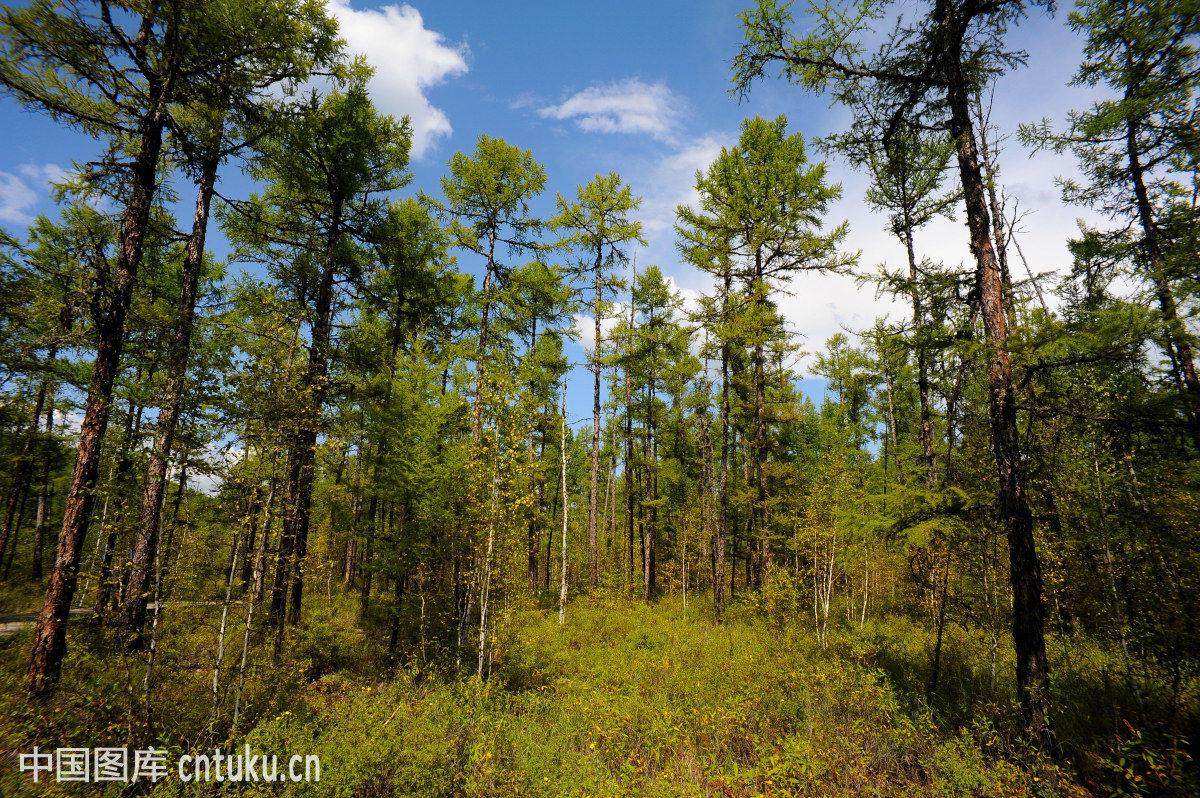 莫尔道嘎森林公园,森林公园,松林古寺,野生动物园,大兴安岭,森林公园图片