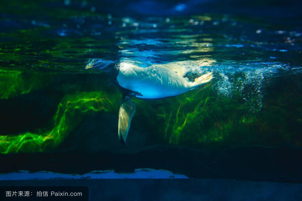 �9b�9�#yie�(�_可�%b1的企鹅在蓝