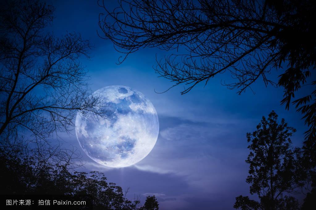 蓝色月光侦探礹.+y��_天空,木材,满月,蓝色,有吸引力的,美丽的,水平的,自然,外部,树,风景