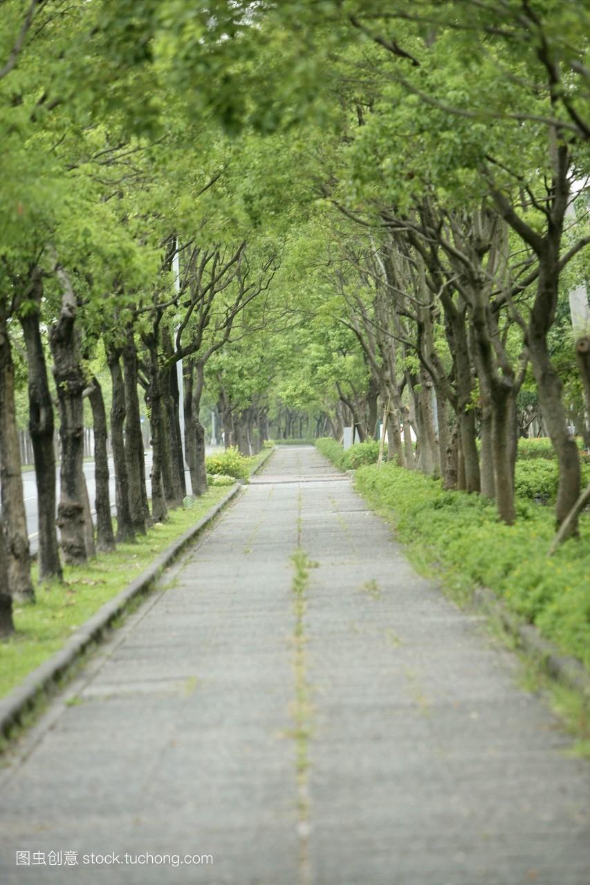 花园,丛林,树,森林,白天,公园,春天,绿色,汽车背景,道路,林荫小径图片