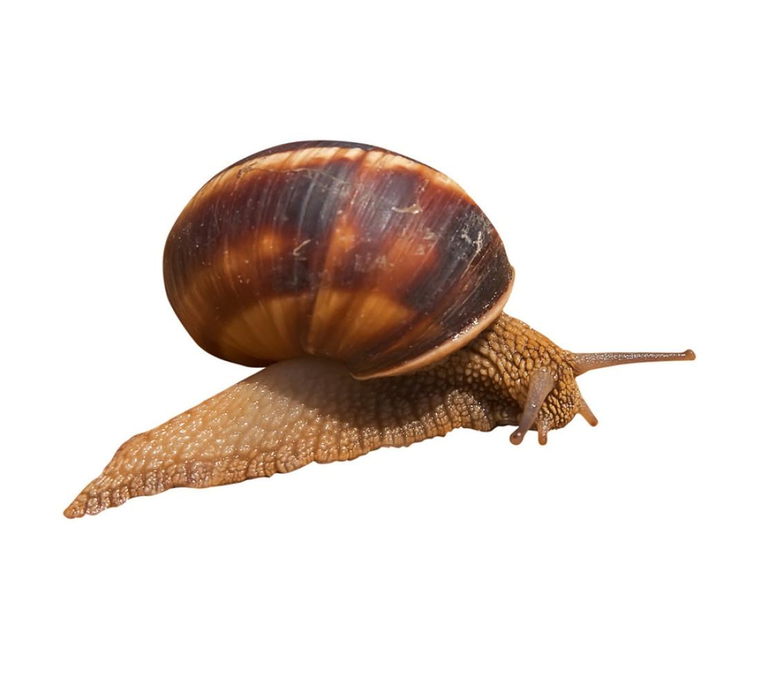 蝙蝠虫是蜗牛变得常州鼻涕图片
