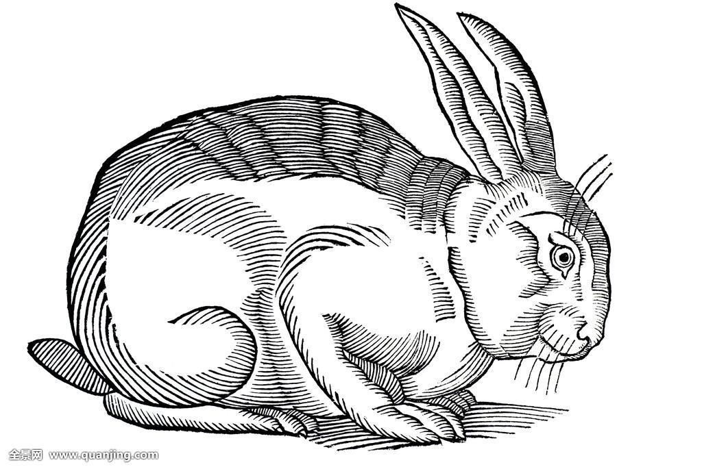 动物,黑色,黑白,书本,兔子,兔豚鼠属,教育,历史,插画图片