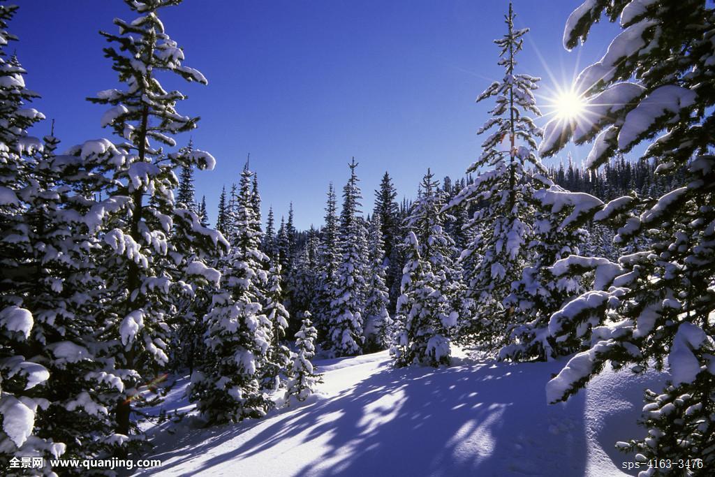 美国,爱达荷,靠近,西部,黄石公园,国家森林,两个,树林,冬景,星放射状图片