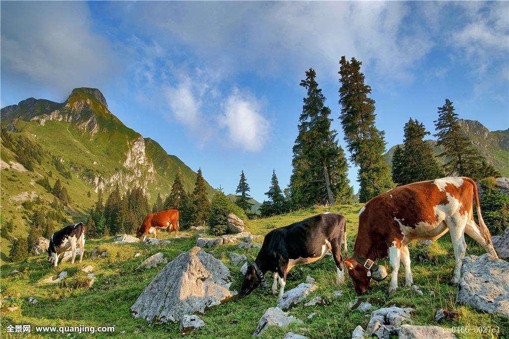 建筑,山,绿色,地点,远足,漫步,高山,欧洲,时间,牲畜,牛科动物,农民,牛图片