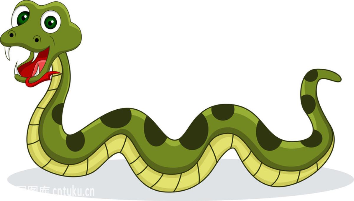 卡通,恐怖,蝰蛇,绿色,皮肤,蛇,设计,矢量图,尾巴,纹身,邪恶的,眼镜蛇图片