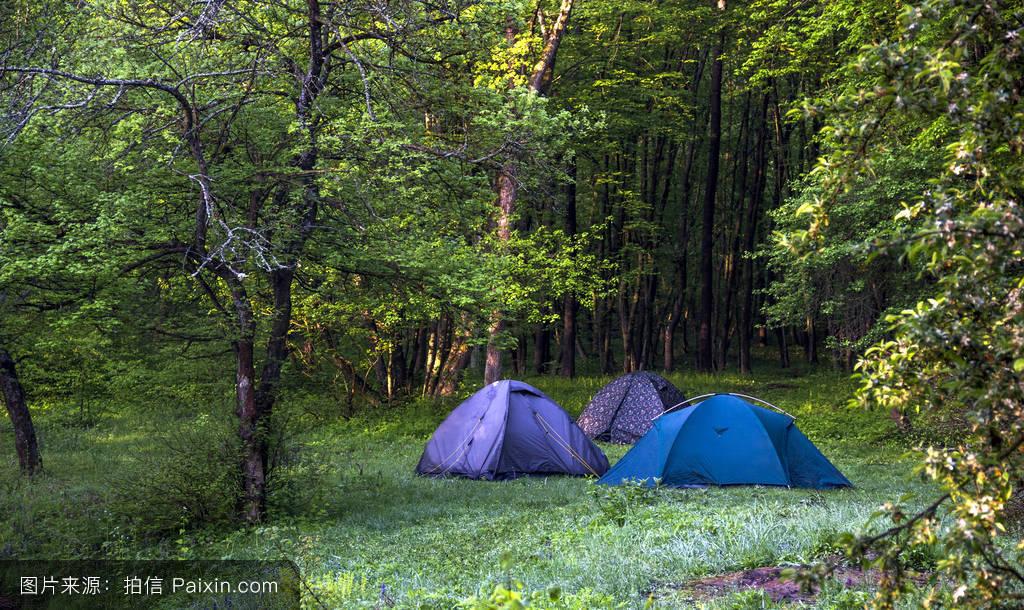森林最大野人营地分享展示图片