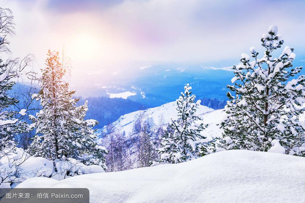 雪��/~���x+�x�&�7:d��_日落时分冬季森林中白雪覆盖的树木.