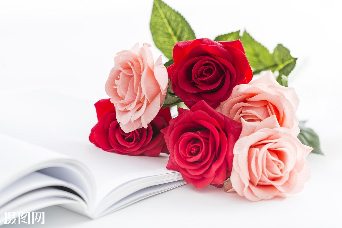 玫瑰,七夕,红色玫瑰花,书本,文艺,浪漫,一束玫瑰花,祝贺,七夕节,花,鲜图片