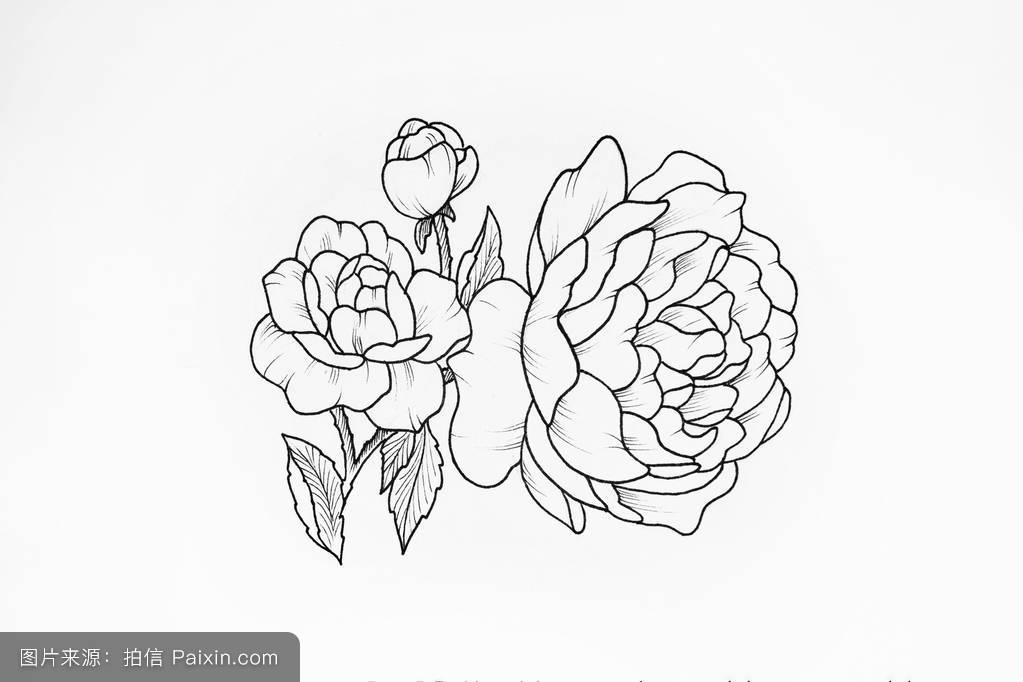 开花,形象,牡丹,花的,艺术,设计,黑色和白色,白色的背景,书,纹身牡丹