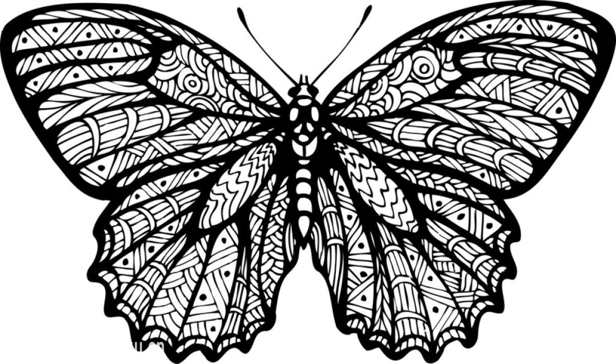 蝴蝶,昆虫,轮廓,设计,时尚,矢量图,图标,图片规格,弯曲,纹身,现代图片