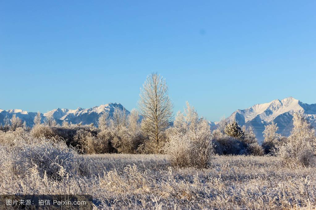 山���!�-��.�9`a�f-:##_天空,木材,蓝色,景观,雪,新鲜的,雪花,分支,自然,树,山,岩石,冷冻