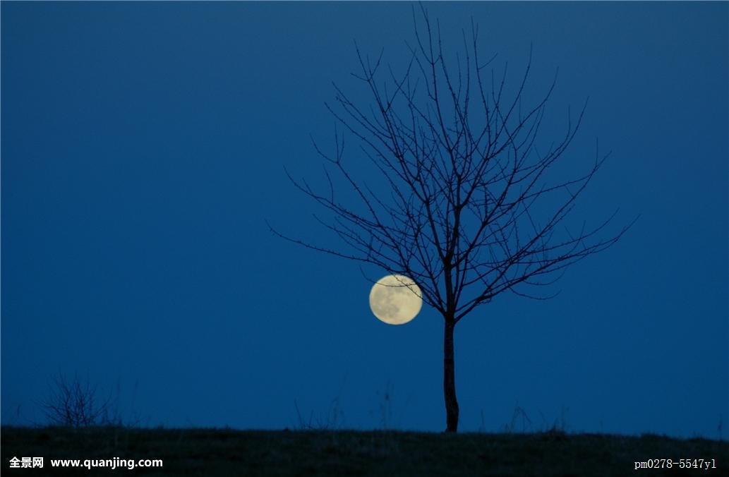 蓝色月光侦探礹.+y��_蓝色,树,月亮,晚间,枝条,晚上,月光,地球,星球,世界,苍穹,天空,天体