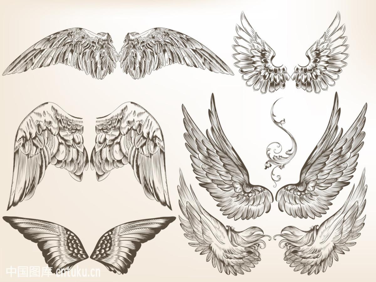 白色,标签,分线规,华丽的,鸟,矢量图,纹身,漩涡形,羽毛,证书,装饰图片