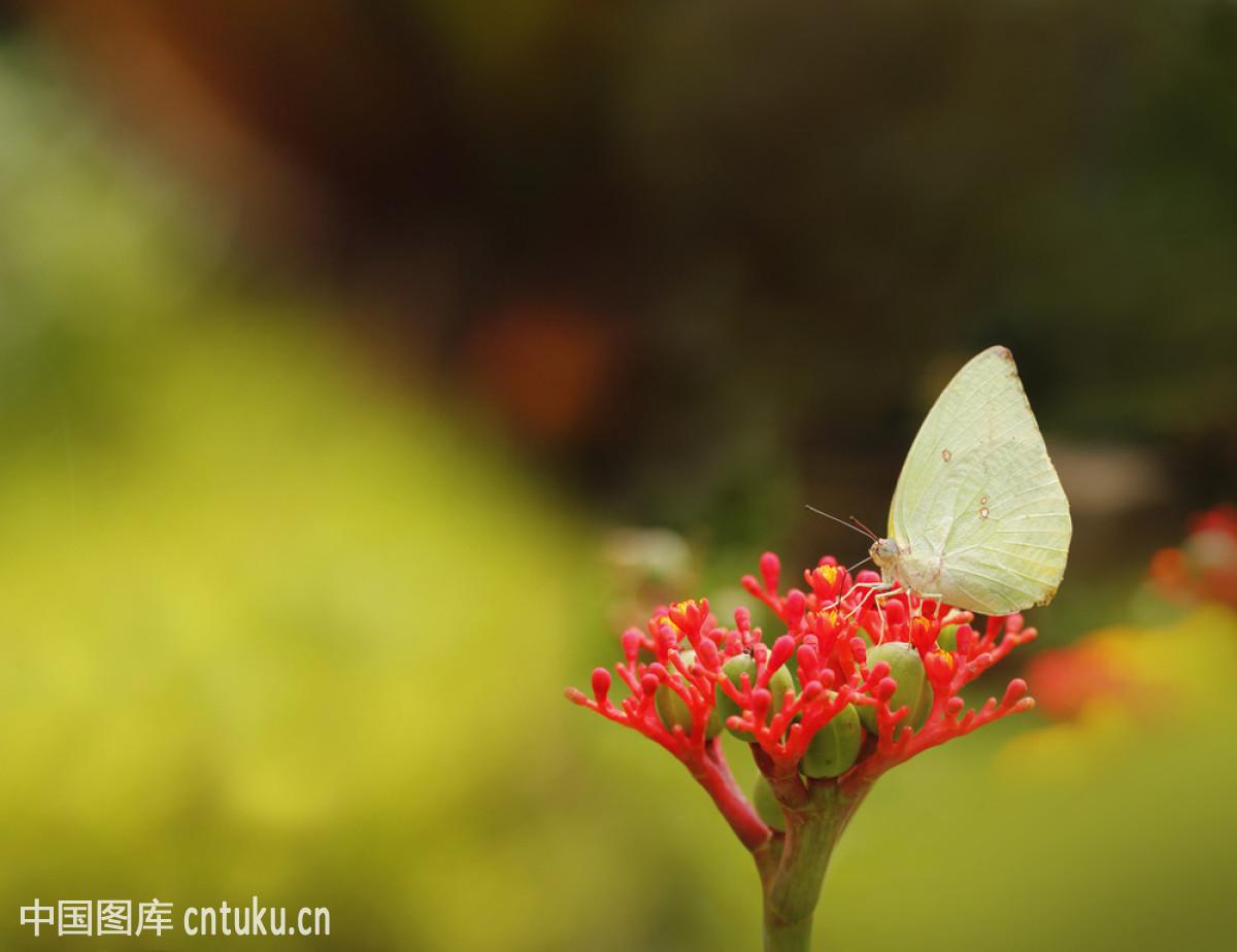 白色,甘蓝,宏,蝴蝶,花,季节,昆虫,绿色,尼斯,庆祝,森林,水平构图,幸福图片