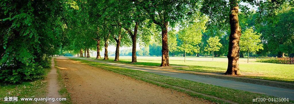 树林,英格兰,公园,公共草地,英国,道路,小路,树,过道,无人,全景,户外图片