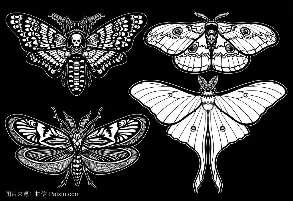 昆虫学,符号,飞蛾,对象,线,蝴蝶,头,打印,线性的,收集,装饰性的,昆虫图片