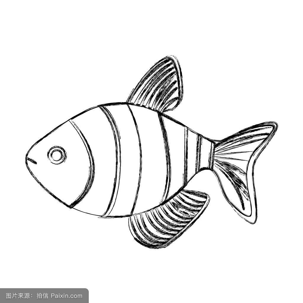 黑白模糊鱼纹图片