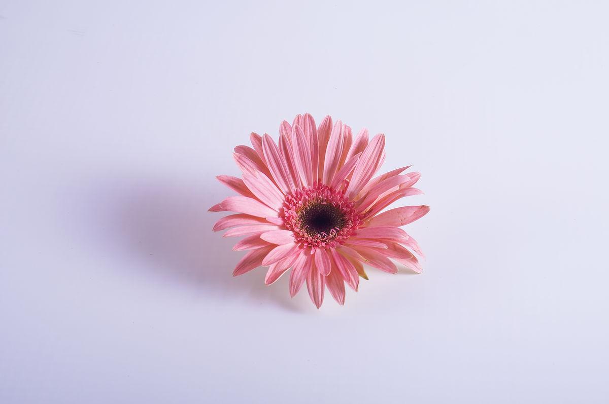 花朵的花字的笔顺